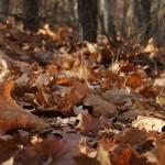 Осінь в мошногорах
